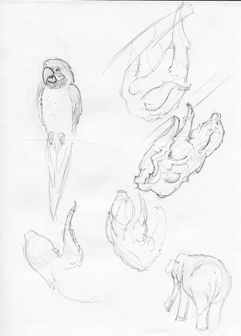 Zoo Sketches 1